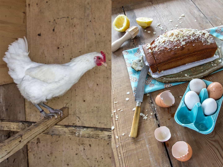 Hofzuwächse und schneller Joghurtkuchen