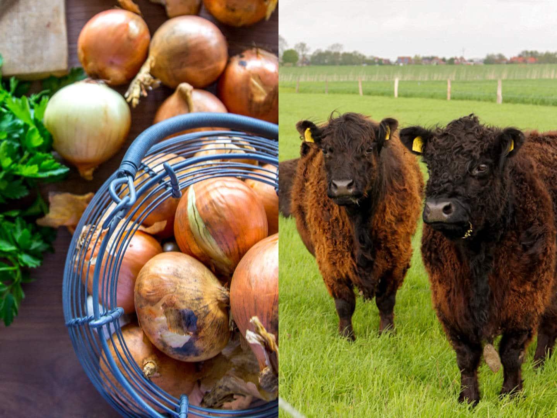 Rettet den Sonntagsbraten: Rinderrouladen von unseren Galloways