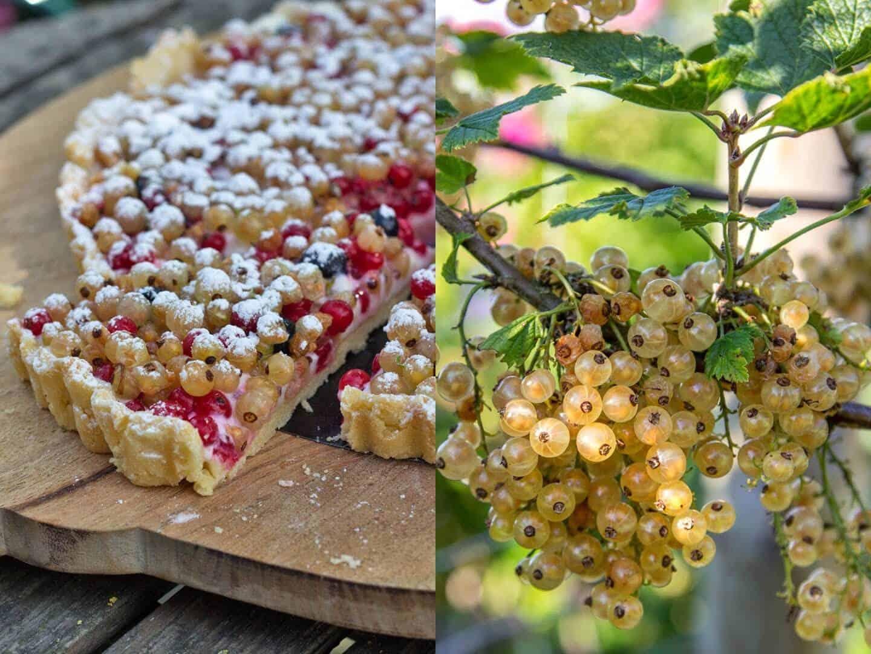 So schmeckt der Sommer – Johannisbeertarte