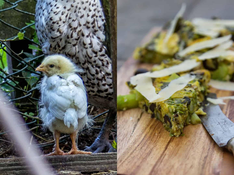 Über Ostfriesische Möwen, einen kleinen Kämpfer und ein Omelett mit grünem Spargel